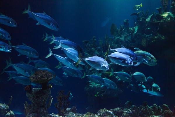 Aquashow Audierne